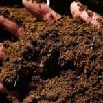 """مزایای کود مرغی گرانوله و پلیت بودن آن (قابل استفاده با تمام دستگاه های کود پاش) استریل شده با بخار و دما عاری بودن از هرگونه بذر علف های هرز و عوامل بیماریزا افزایش دهنده ماده آلی خاک افزایش دهنده فعالیت میکرو ارگانیزم های مفید خاک بسته بندی مناسب درکیسه سه لایه ضد نور کود مرغی موجب اصلاح فعالیت بیولوژیکی ، کشت و کار و خواص شیمیائی خاک می شود سه تن کود مرغی تازه معادل 50 کیلوگرم پتاسیم ، 100 کیلوگرم سوپر فسفاتو 50 تا 100 کیلوگرم ازت دارد. کود مرغی ترکیب شیمیایی بسیار متفاوت نسبت بهسایر کود های حیوانی دارد. این بدان علت است که در کود مرغی مقادیر نسبتا"""" زیاداسیداوریک و سایر اوریدها وجود دارد و این مواد اشکال مختلف اوره هستند و برایگیاهان زراعی می توانند از طریق خاک و داخل بافت گیاه بسیار سمی باشند. کود مرغیتازه حدود 70 درصد رطوبت دارد. کود مرغی اگر به درستی نگهداری و به مزرعه منتقل ومصرف شود کود بسیار با ارزشی می باشد. شرایط نگهداری کودمرغی : نگهداری توده کود مرغی در فضای باز و در معرض باد و بارانموجب هدر رفتن ازت آن به شکل گاز آمونیاک می شود و بوی تند کود مرغی حاصل تصعید گازآمونیاک می باشد و در نتیجه ارزش غذایی کود مرغی از نظر ازت کاهش مییابد. برای کاهش خروج گاز امونیاک و بوی تند کود مرغی و کاستنتلفات روان آب فسفر و عناصر غذایی کم مصرف ، کود مرغی را با مصرف سولفات آلومینیوم اصلاح می کنند. برای حفظ ازت کود مرغی و کاهش بوی گاز آمونیاک وتلفات ازت مصرف کود سوپر فسفات تریپل به مقدار 50 کیلوگرم به ازای هر تن کود مرغیاستفاده می شود. فسفات با آمونیوم کود مرغی ترکیب شده و از هدر روی ازتمرغی جلوگیری می کند. کمپوست کردن کود مرغی با گوگرد نه تنها آلودگی زیست محیطیمربوط به کود مرغی را کاهش می دهد بلکه موجب افزایش تاثیر زراعی آن نیز میشود. با کمپوست کردن کود مرغی محصولی بدست می آید که حمل و نقل وکاربرد آن راحت تر انجام می گیرد. در فرایند کمپوست سازی ترکیبات گازی دی اکسیدکربن و ازت کود با هوا رفتن هدر می رود. بنابراین گرچه درصد عناصر غذایی کمپوست کودمرغی بیشتر از حالت اولیه آن است اما مقدار عناصر غذایی محصول نهایی کمپوست ازمحصول اولیه آن کمتر است. مقدار مصرف کودمرغی : بهترین روش در تعیین مقدار مصرف کود مرغی در هر هکتار انجام آزمونتجزیه کود مرغی می باشد. در این آزمون مقدار عناصر غذ"""