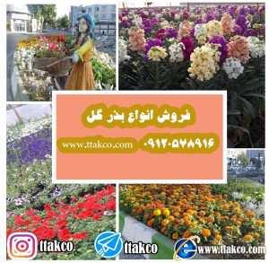 فروش انواع بذر گل - بذر گل (F1) - فروش بذر گل ایرانی فروش بذر گل ، بذر گل ایرانی و خارجی ، فروش بذر گل( F1 )- 09120578916 فروش بذر گل برای شهرداری ها ،فروش بذر گل برای گلخانه ها ، بذر گل مارگارت ، بذر گل میمونی ، مینا چمنی ، همیشه بهار ،بنفشه ، گل کلمی ، بذر گل ، فروشگاه بذر گل آپارتمانی ، فروش بذر گل در اصفهان ، بذر گل های وحشی ، فروش بذر گل خارجی ، فروش بذر گل رز ، فروش بذر گل در مشهد ، بذر گل باغچه ، انواع بذر گل برای باغچه ، فروشگاه بذر ، فروشگاه بذر گل ، فروش گل