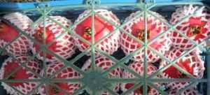 فوم پلی اتیلن ضربه گیر – فوم پلی اتیلن – فوم پلی اتیلن تبریز – فوم پلی اتیلن چیست – تولید کننده فوم پلی اتیلن – فوم توری بسته بندی – فوم برش خورده برای بسته بندی کالا – جهت بسته بندی میوه – شیشه کریستال لوازم خانگی- بطری – ابزار دقیق لوازم وتجهیزات پزشکی – میوه های صادراتی – فوم توری بسته بندی مرکبات – فوم توری پلی اتیلن – بسته بندی میوه انار – فوم و ضربه گير – صنعت بسته بندی – فوم توری پلی اتیلن بسته بندی میوه انار و سیب و پرتقال – فوم توری پلی اتیلن بسته بندی میوه – بسته بندی محصولات ولوازم صنعتی – فوم پلی اتیلن – قیمت فوم پلی اتیلن – چسب فوم پلی اتیلن – کارخانه فوم پلی اتیلن – فوم بسته بندی میوه – فوم توری میوه – انواع فوم بسته بندی – اسفنج بسته بندی – قیمت فوم بسته بندی – فوم ضربه گیر بسته بندی – فوم رول بسته بندی – ابر بسته بندی – فوم داخل جعبه – فوم ضربه گیر سنگ و کالا – فوم ضربه گیر – فوم ضربه گیر بسته بندی – قیمت فوم ضربه گیر – فوم های ضربه گیر – ضربه گیر فومی – قیمت فوم ضربه گیر بسته بندی – ضربه گیر – فوم ضربه گیر